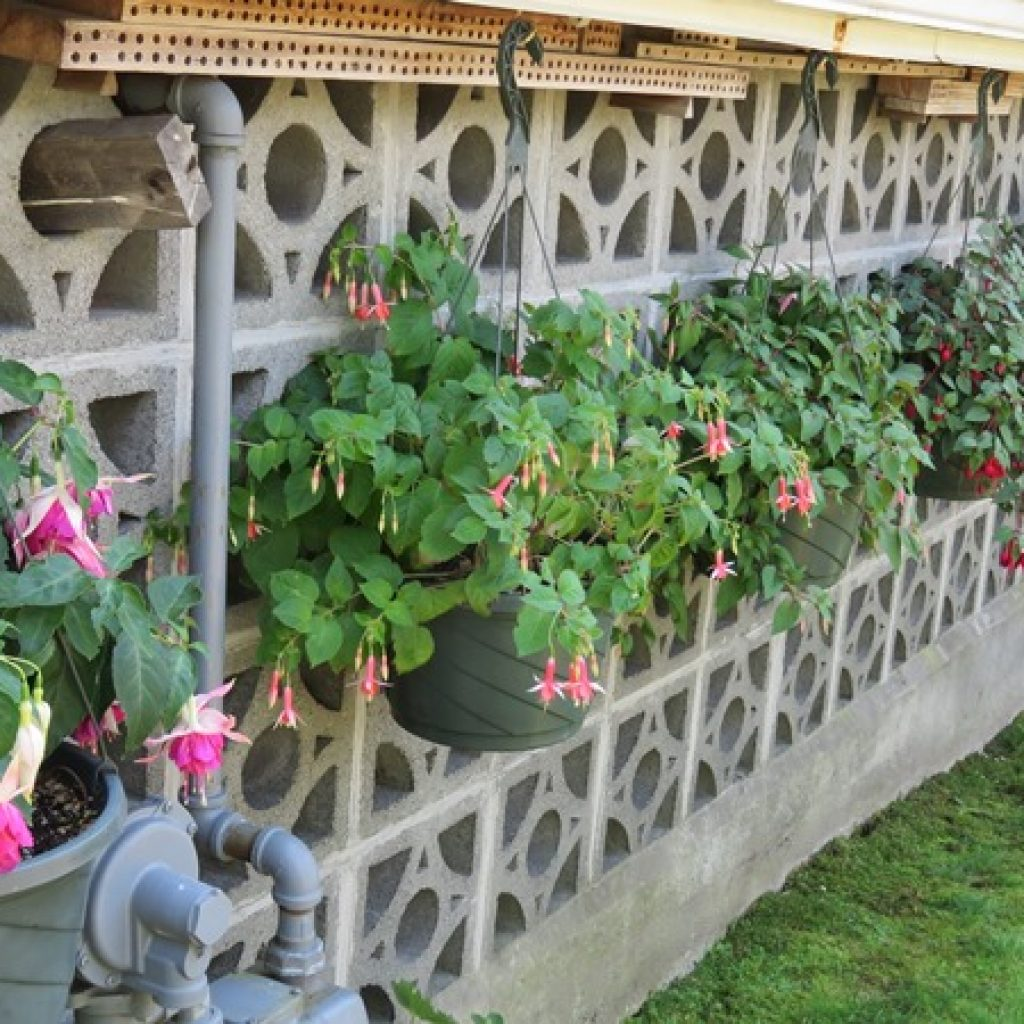 Overwintering a Large-scale Fuchsia Garden