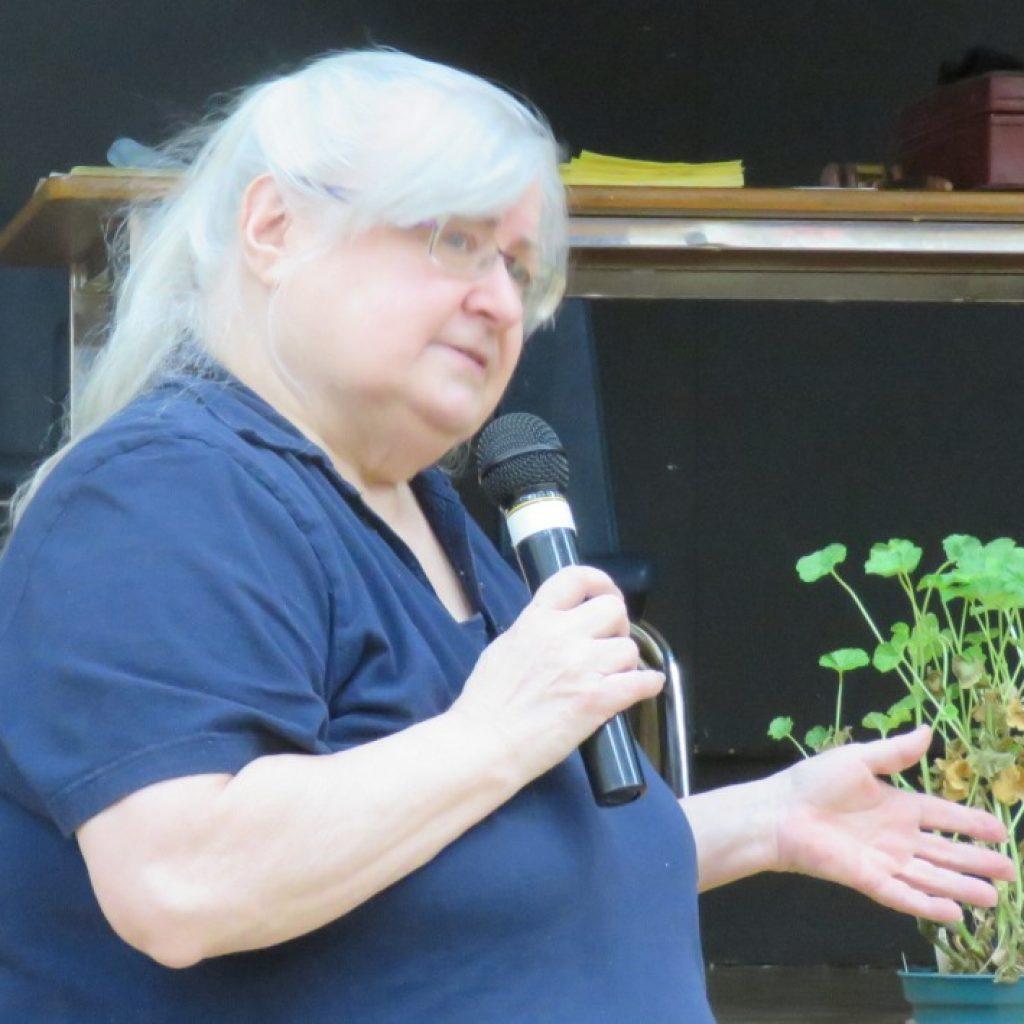 Geraniums and Pelargoniums: Unsung Garden Heros
