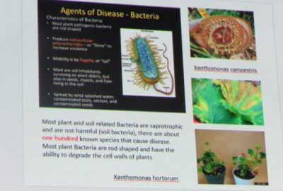 Pests and Diseases of Fuchsia and Geraniums by Ronald Kok